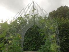 Plant Support Arch